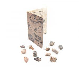 Fossiliensammlung - 12 Stück