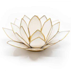 Lotus Atmosphärisches Licht Weißgold Goldrand