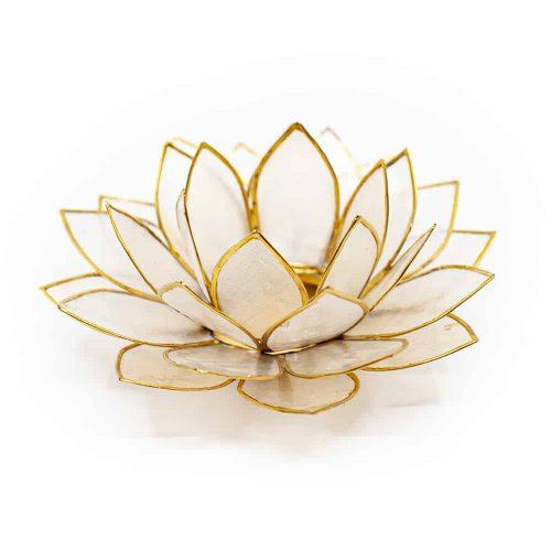 Bedeutung, Wachstum und Blüte der Lotusblume bis zur heiligen Wasserpflanze