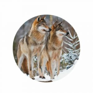 Porzellan Speiseteller 2 Wölfe (27 cm)
