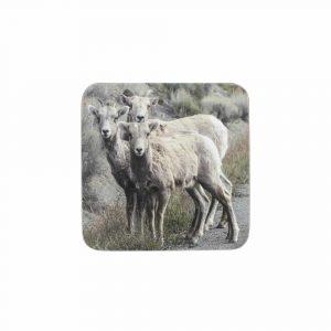Untersetzer Schafe (Satz von 6 Stück)
