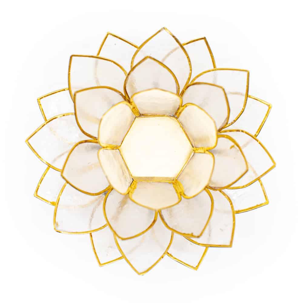 Lotusblume Stimmungslicht Draufsicht auf Weißem Hintergrund