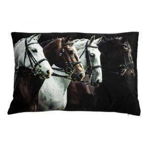 Samtkissen Pferde (60 x 40 cm)