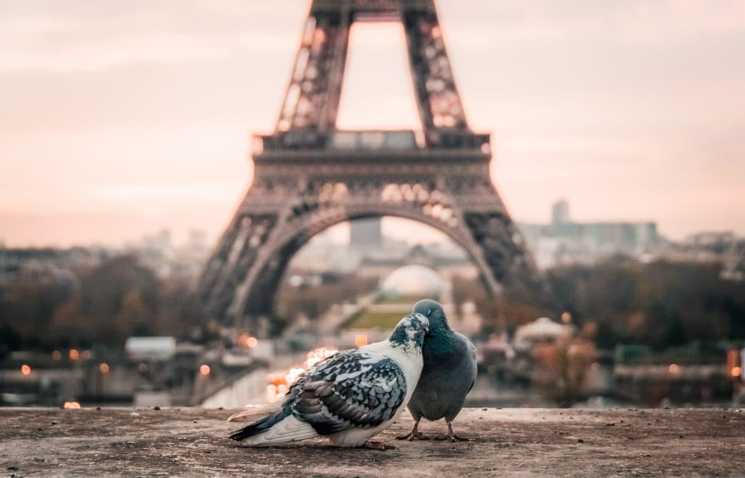 Zwei schmusende Tauben vor Eiffelturm in Paris Liebe Sternzeichen Zwilling