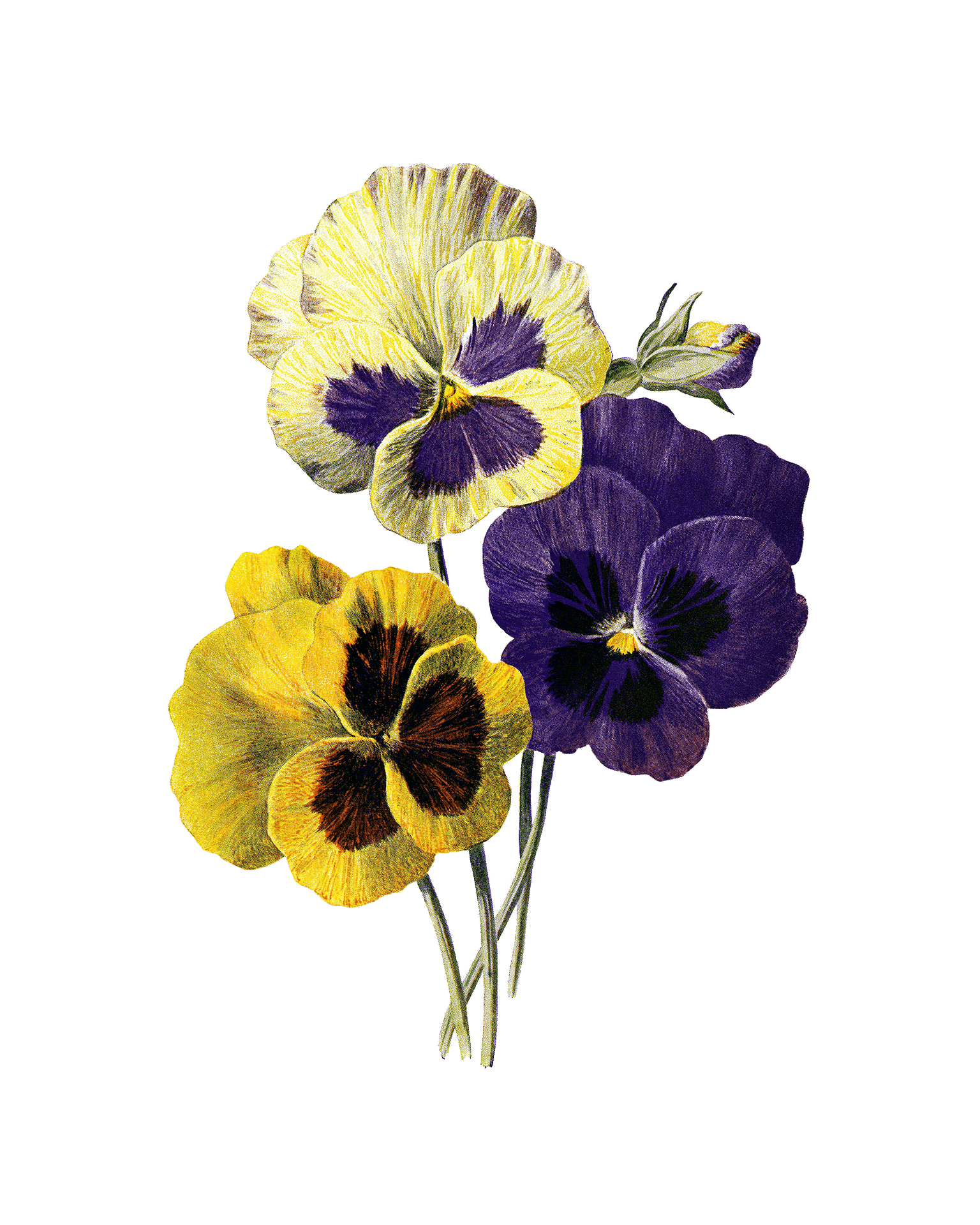 Gelb Lila Blumen mit je 5 Blütenblättern Illustration bunt auf weißem Hintergrund