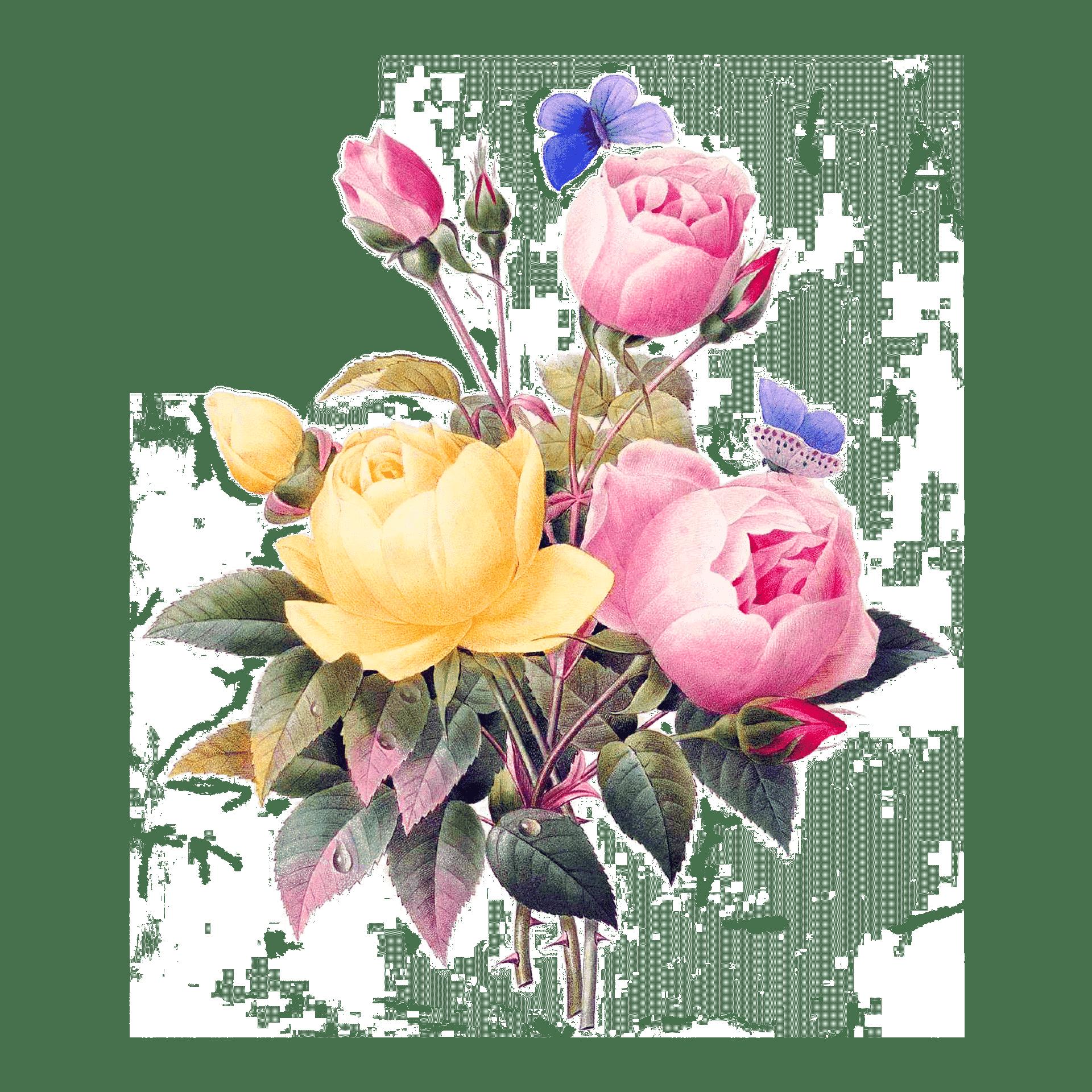 Rosa und gelbe Rosen Strauß mit Violetten kleinen Schmetterling Illustration auf weißem Hintergrund