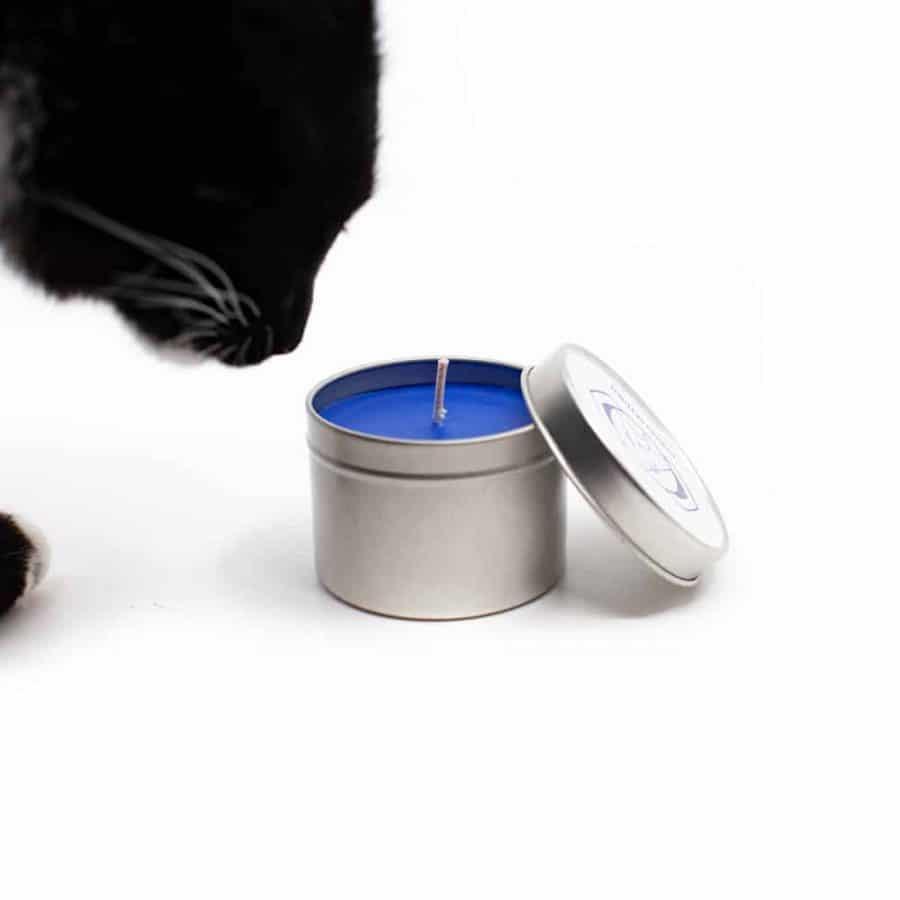Blaue Kerze in Silber Dose mit schwarzer katze auf weißem Hintergrund