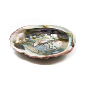 Abalone-Schale - Groß - 90 bis 100 mm