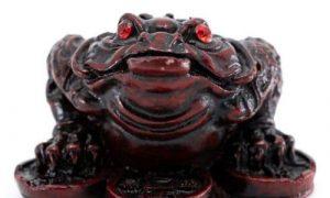 Feng Shui Frosch